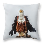 Not So Majestic Eagle Throw Pillow