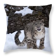 Not Too Close -  Please Throw Pillow