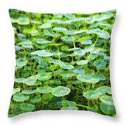 Nuanced Nasturtium Throw Pillow