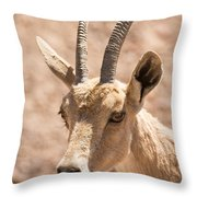 Nubian Ibex Capra Ibex Nubiana 1 Throw Pillow