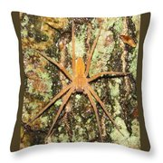 Nursery Web Spider Throw Pillow