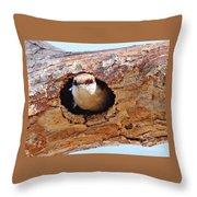 Nuthatch Bird In Nest Throw Pillow