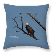 Nw Florida Bald Eagle Iv Throw Pillow