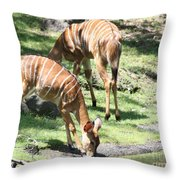 Nyalas At The Watering Hole Throw Pillow