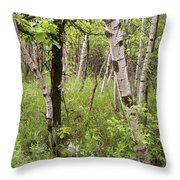Oak And Birch Throw Pillow