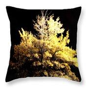 Oak At Night Throw Pillow