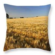 Oak At The Field Throw Pillow