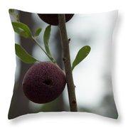 Oak Galls Throw Pillow
