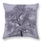 Oak In Snow Throw Pillow by Don Perino
