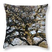 Oak Tree In Winter Throw Pillow