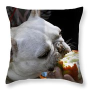 Oat Meal The French Bull Dog Throw Pillow