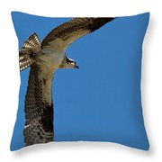 Obtuse Osprey Throw Pillow