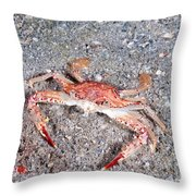 Ocellate Swimming Crab Throw Pillow