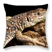 Ocellated Lizard Timon Lepidus Throw Pillow