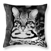 Ocelot In Repose Throw Pillow