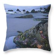 Ochre Sea Stars At Low Tide Miwok Beach Throw Pillow