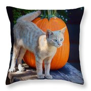 October Kitten #1 Throw Pillow