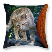 October Kitten #2 Throw Pillow