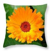 October's Summer Sunlit Marigold  Throw Pillow