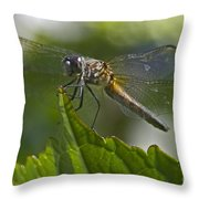 Odonata Throw Pillow