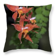 Odontioda Red Riding Hood Macro  8710 Throw Pillow