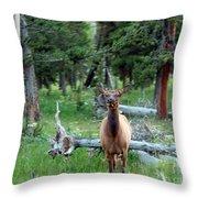 Oh Dear I See A Deer Throw Pillow