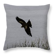 Oil Painting - A Large Bird Flying As Part Of The Birds Of Prey Show Throw Pillow