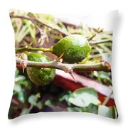 Oil Painting - Lemons Along With Pain Throw Pillow