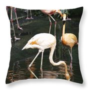 Oil Painting - The Head Of A Flamingo Under Water In The Jurong Bird Park In Singapore Throw Pillow