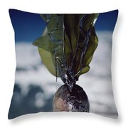 Oiled Kelp From Exxon Valdez Spill Throw Pillow