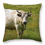 Ol Bossy Throw Pillow