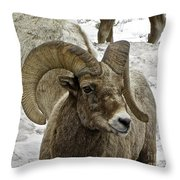Old Big Horn Sheep Throw Pillow