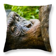 Old Chimp Throw Pillow