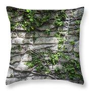 Old Coquina Wall Throw Pillow