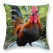 Old English Game Bantam Throw Pillow