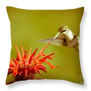 Old Fashioned Hummingbird Throw Pillow