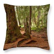 Old Growth Cedar At Cheakamus Lake Throw Pillow