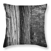 Old Growth Cedars Glacier National Park Bw Throw Pillow
