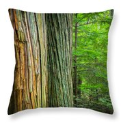 Old Growth Cedars Glacier National Park Painted Throw Pillow by Rich Franco