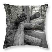 Old Growth Forest Black And White Collection 4 Throw Pillow