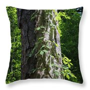 Old Growth  Loblolly Pine - Congaree Swamp Throw Pillow