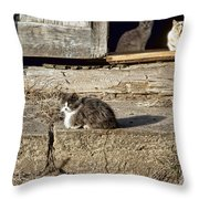 Old Knox Church Cats #2 Throw Pillow