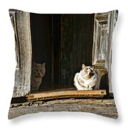 Old Knox Church Cats Throw Pillow