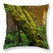 Old Man Of The Forest Throw Pillow