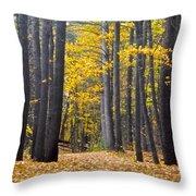 Old Pine Trees Throw Pillow