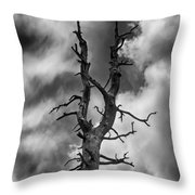 Old Trees Reach For The Sky Throw Pillow