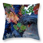 Old Vine Throw Pillow by Kathy Yates