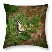 Old World Swallowtail. Montorfano. Cologne Throw Pillow