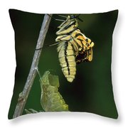 Oldworld Swallowtail Butterfly Throw Pillow
