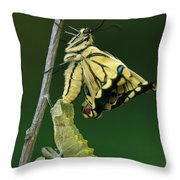 Oldworld Swallowtail Emerging Throw Pillow